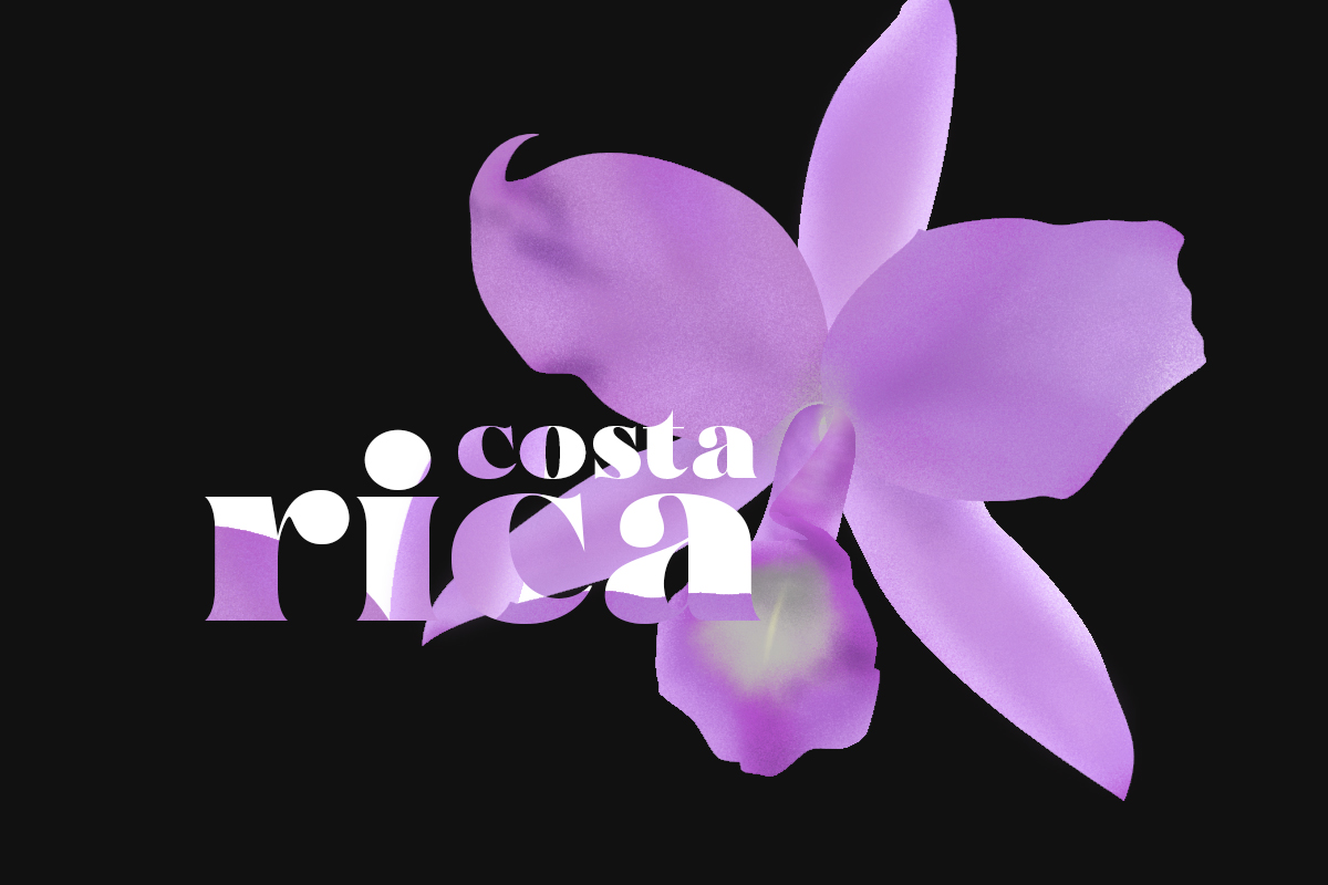 Purple Country Girl flower representing Costa Rica